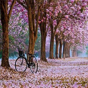 دانلود آهنگ خوابای تو بهار پاییزای تب دار
